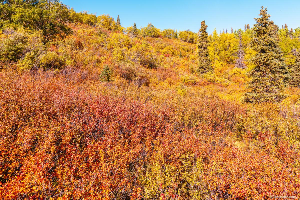 Auriol Trail foliage